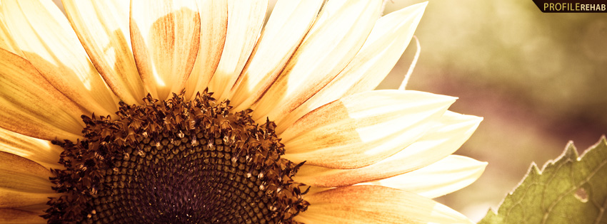 Thankful Wallpaper Quotes Beautiful Sunflower Photography Facebook Cover