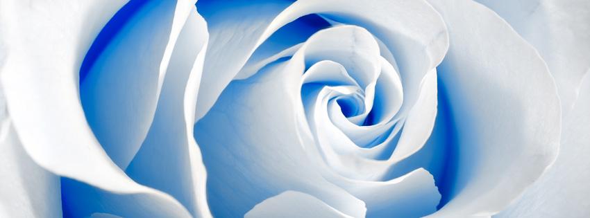 Blue Rose Facebook Cover for Timeline - Facebook Cover Download