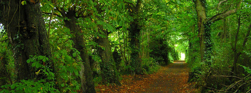 Dark Theme Wallpaper Hd Quote Pretty Ireland Forest Facebook Cover