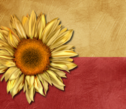 Sunflower Wallpaper With Quote Free Yellow Twitter Backgrounds Cool Yellow Twitter