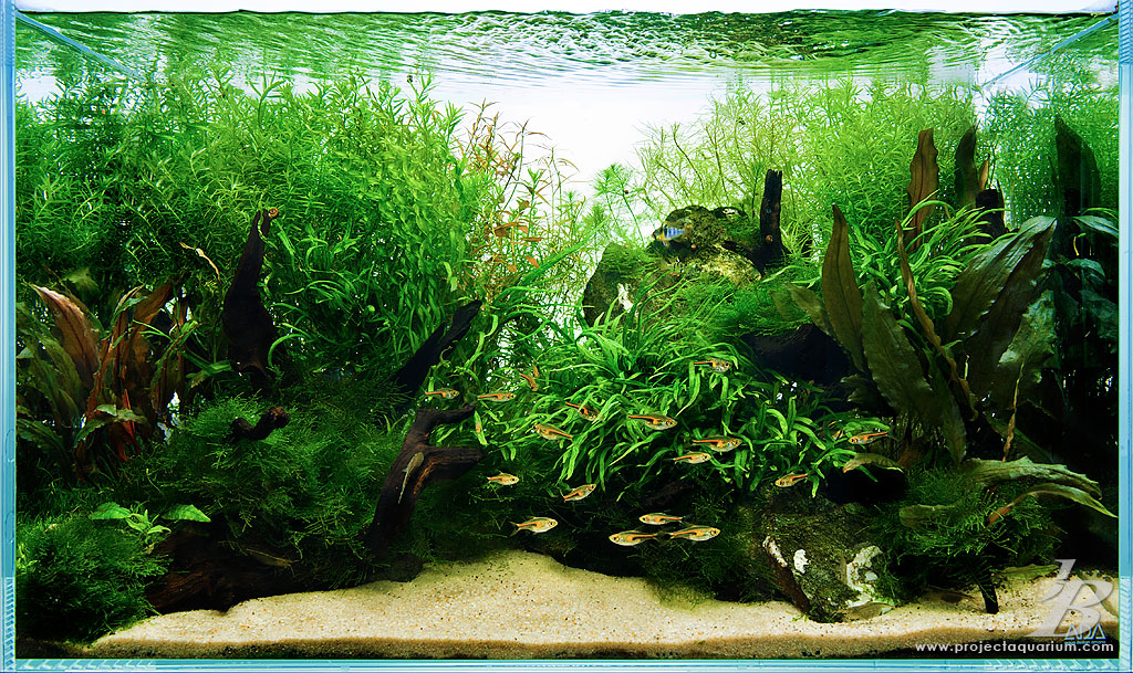Animated Fish Tank Wallpaper Special Projects On Pinterest Aquascaping Planted