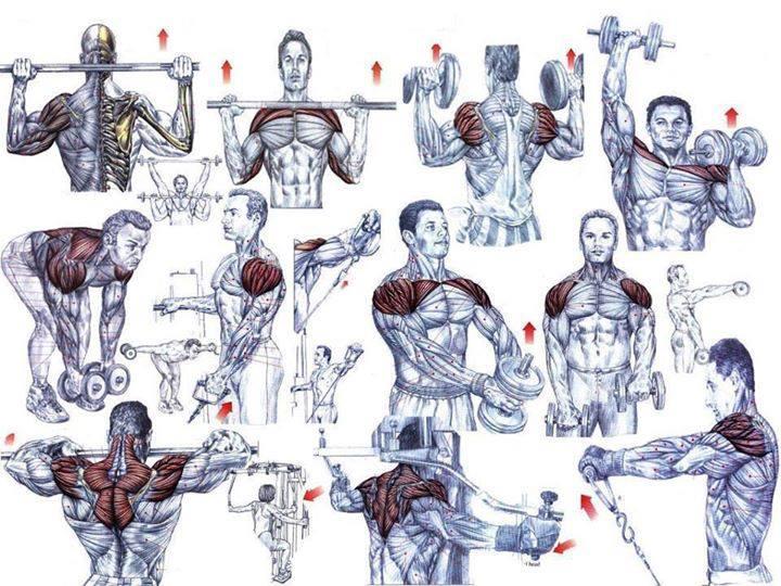 Shoulder Exercises For Beginning Bodybuilders Project NEXT