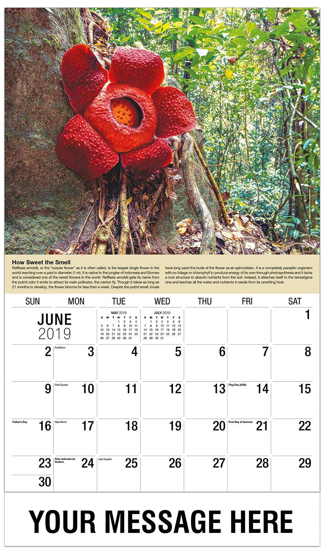 2019 all months calendar