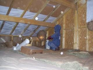 désinsectisation nid de guêpes