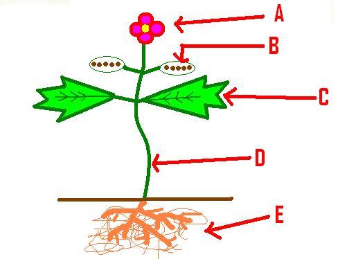 Plants Review Quiz - Mr Prochaska\u0027s 5th Grade Science - ProProfs Quiz