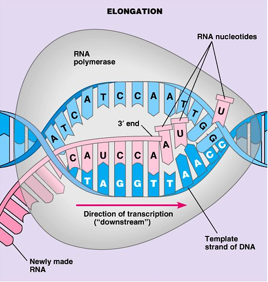 What Is Protein Synthesis - Protein Synthesis