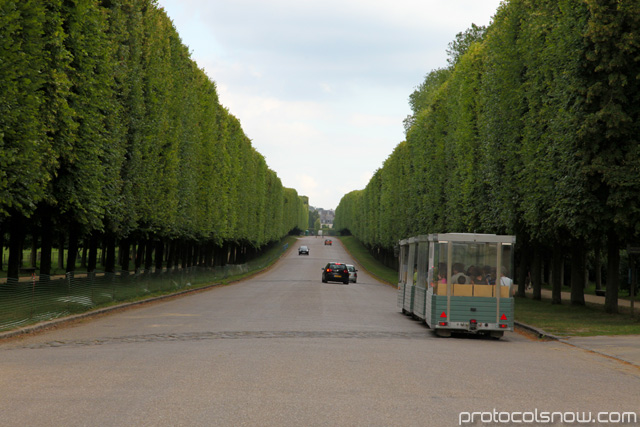 Palace of Versailles trees