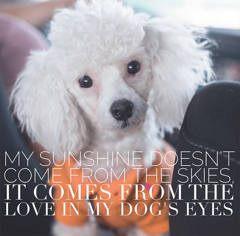 Download Wallpapers Of Good Quotes 19 Relatable Dog Quotes That Will Warm Your Heart Proud
