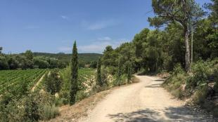The last (rather tame)  portion of the road to Domaine Saint Andrieu.  Photo by Susan Manfull
