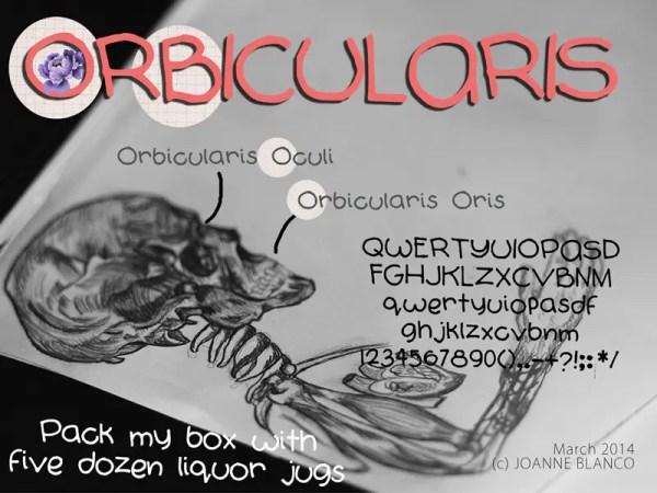 Orbicularis