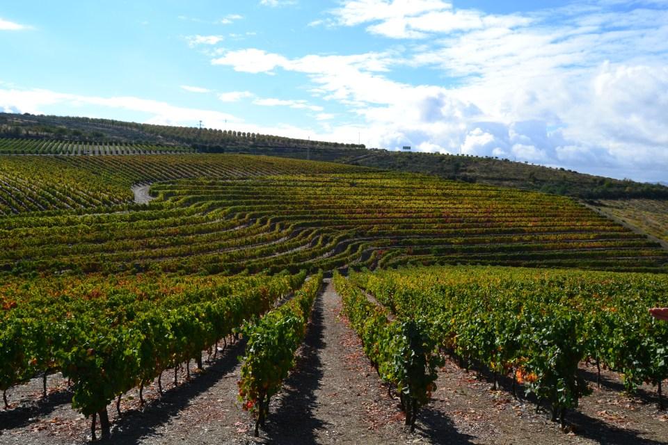 Menos quantidade mas qualidade superior na colheita deste ano no Douro / Foto: Direitos Reservados