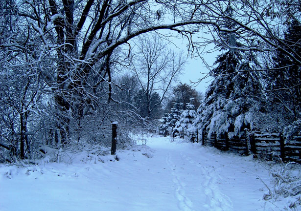 Free 3d Snow Falling Wallpaper Snowy Day Free Stock Photo Public Domain Pictures