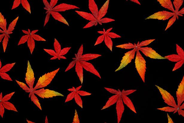 Free Animated Falling Leaves Wallpaper Autumn Leaves On Black Free Stock Photo Public Domain
