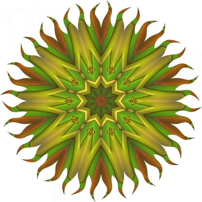 Large Of Sun Star Plant