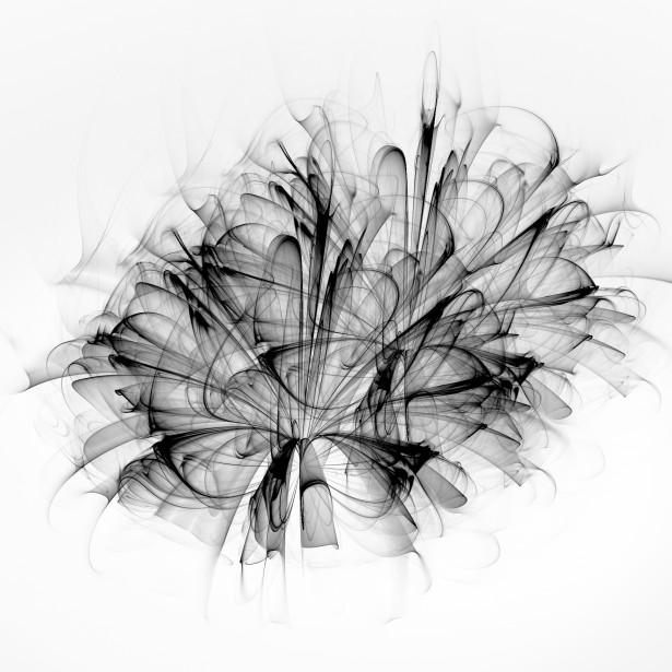 Wallpaper Design Black Fractal Black Flower Free Stock Photo Public Domain Pictures