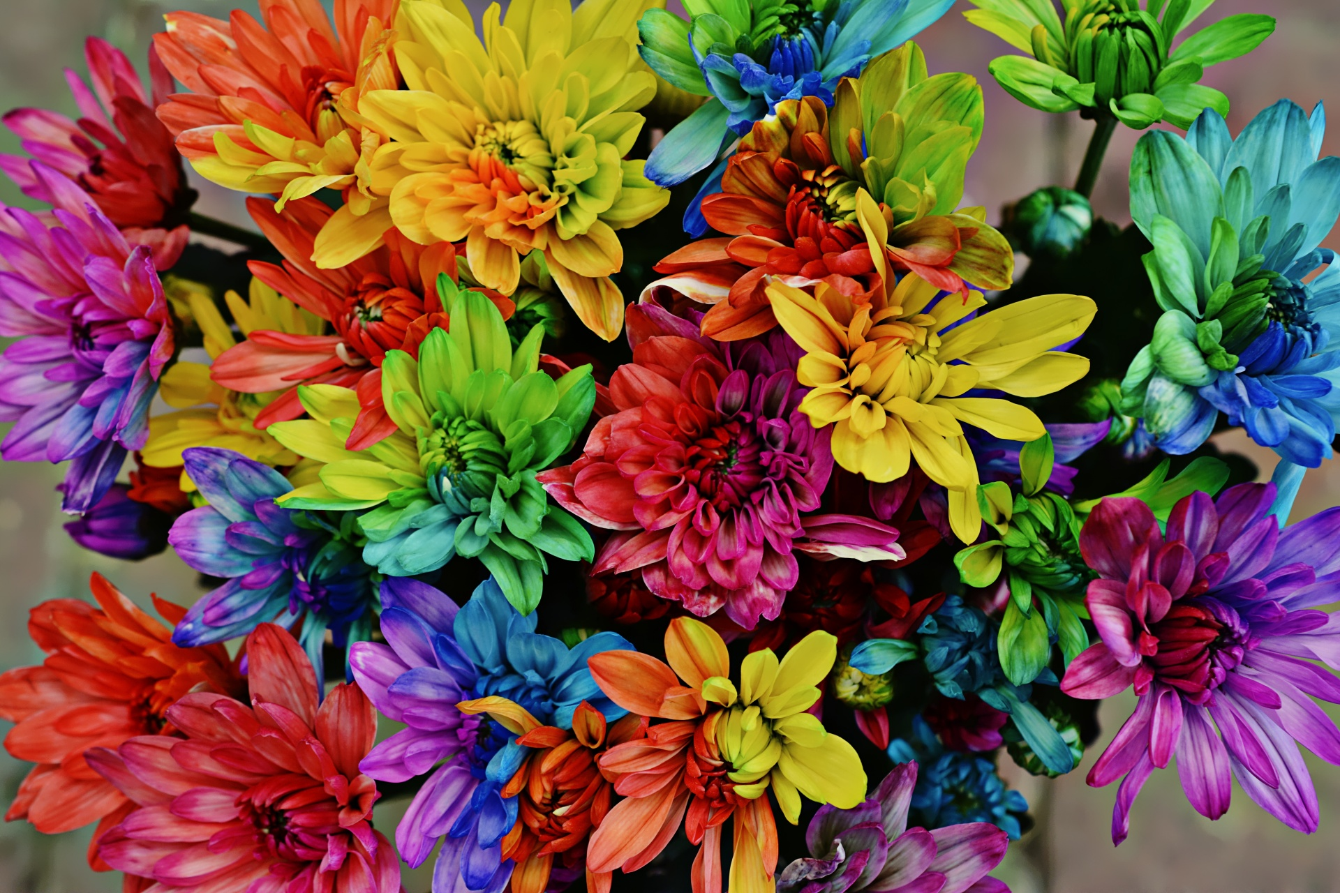 Www Wallpaper Com Free Download Hd Colourful Flowers Free Stock Photo Public Domain Pictures