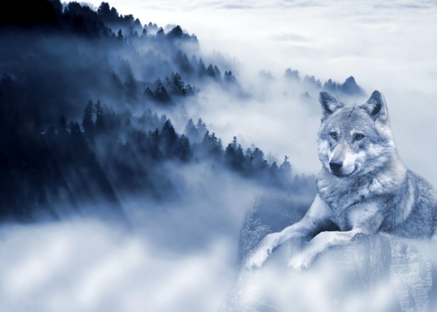 Cute Cloud Wallpaper Wolf Background Free Stock Photo Public Domain Pictures