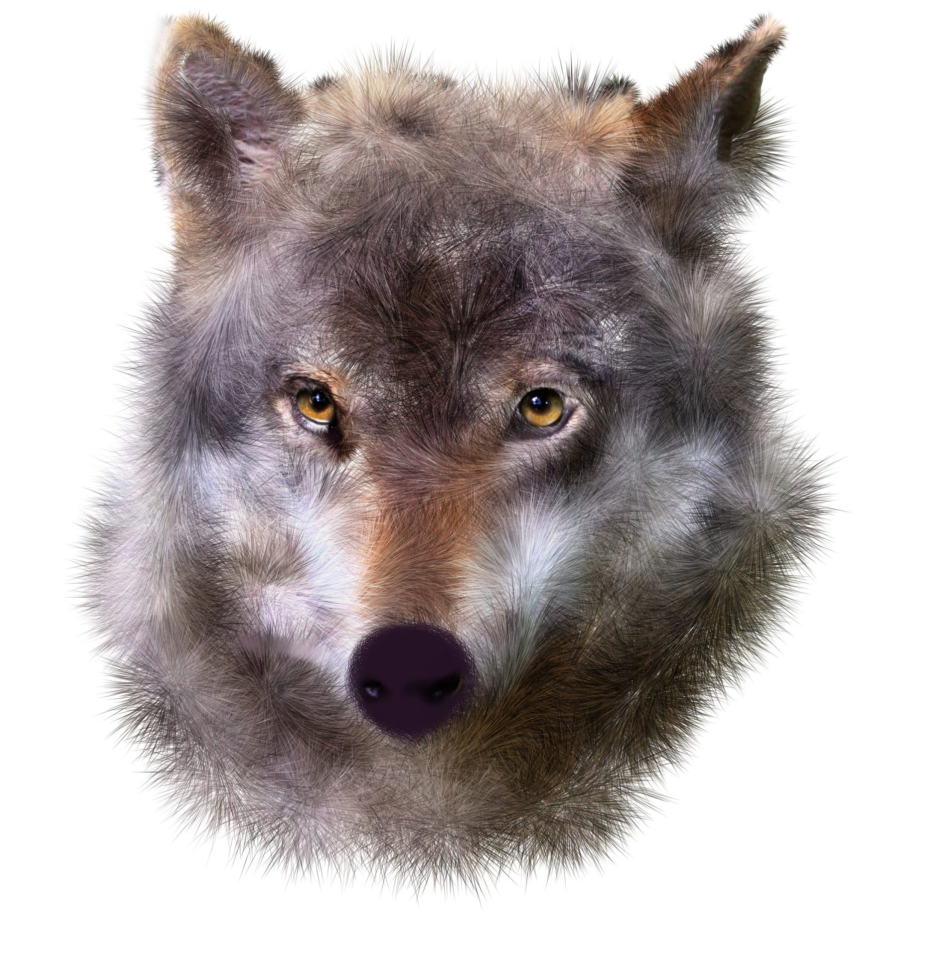 Animal Wallpaper Download Wolf Face Free Stock Photo Public Domain Pictures