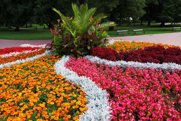 Flower Bed In The Park Free Stock Photo Public Domain
