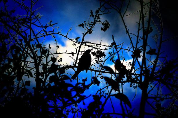 Dark Clouds Hd Wallpaper Silhouette Of Bird Light Effects Free Stock Photo Public