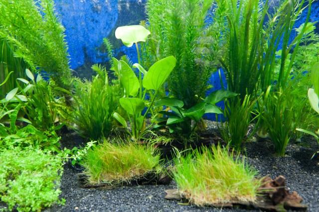 Aquarium Plants Free Stock Photo HD   Public Domain Pictures