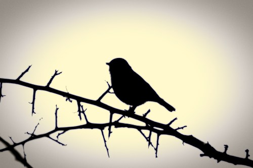 Catchy Silhouette A Bird On A Branch Silhouette A Bird On A Branch Free Stock Photo Public Domain Birds On A Branch Logo Birds On A Branch Wall Art