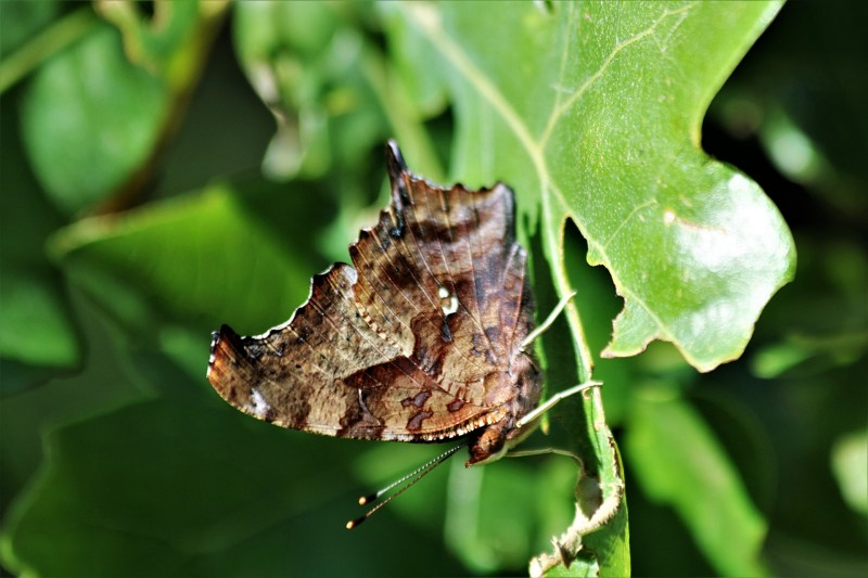 Large Of Butterfly Close Up