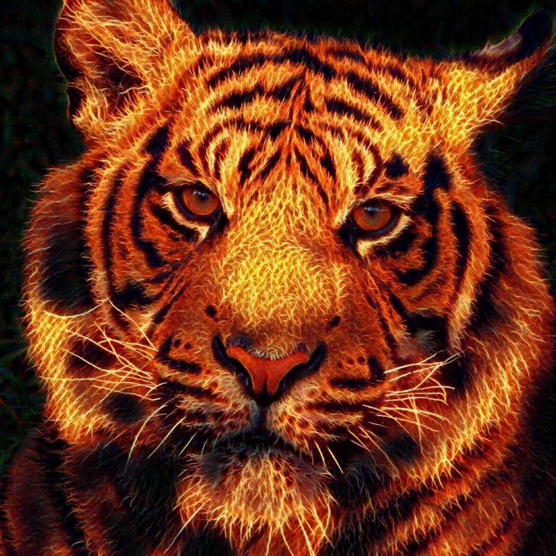 Free Animal Wallpaper Download Fire Tiger Free Stock Photo Public Domain Pictures