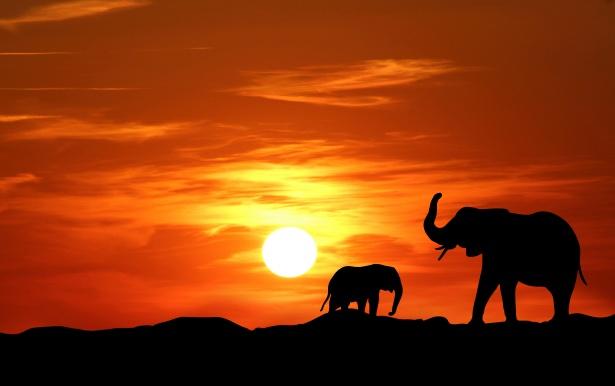 Black And Orange Wallpaper Elephant Sunset Silhouette Free Stock Photo Public