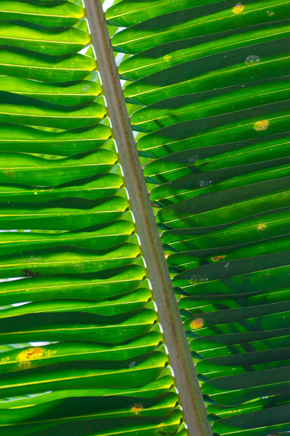 Iphone X Stock Wallpaper Palm Tree Leaf Pattern Free Stock Photo Public Domain