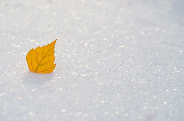 Falls Wallpaper Download Yellow Leaf On The Snow Free Stock Photo Public Domain