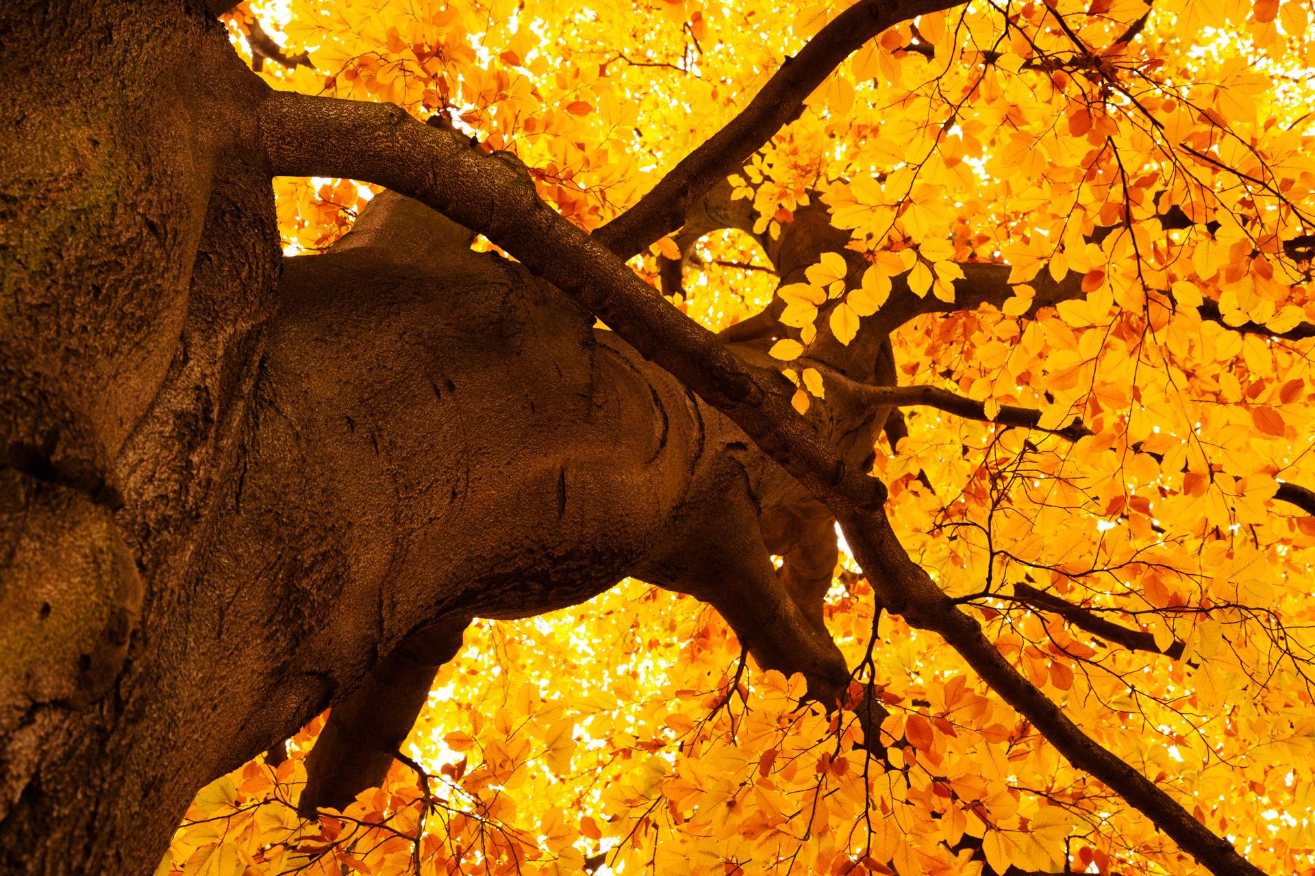 Fall Colors Desktop Wallpaper Yellow Tree In Autumn Free Stock Photo Public Domain