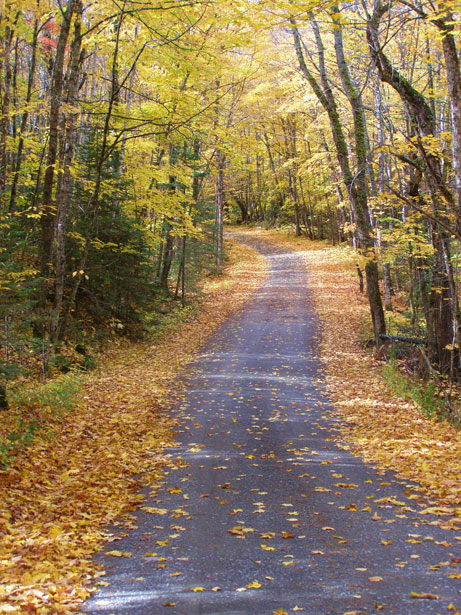 Fall Computer Wallpaper Backgrounds Beautiful Country Road In Fall Free Stock Photo Public