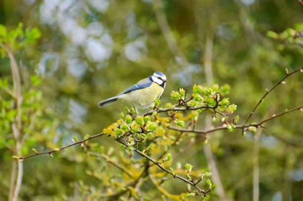 Animal Wallpaper Download Bird And Tree Free Stock Photo Public Domain Pictures