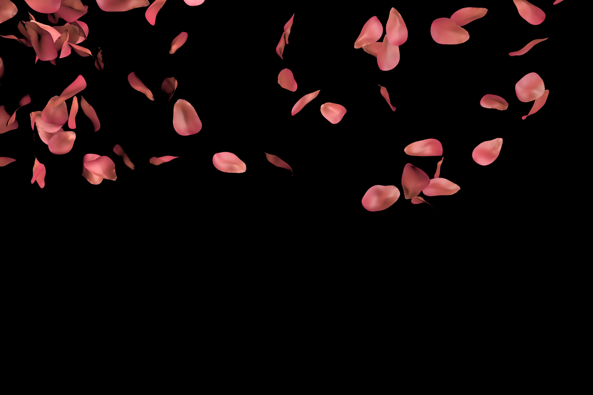 Rose Petals Falling Wallpaper Transparent Gif Rose Petals Free Stock Photo Public Domain Pictures
