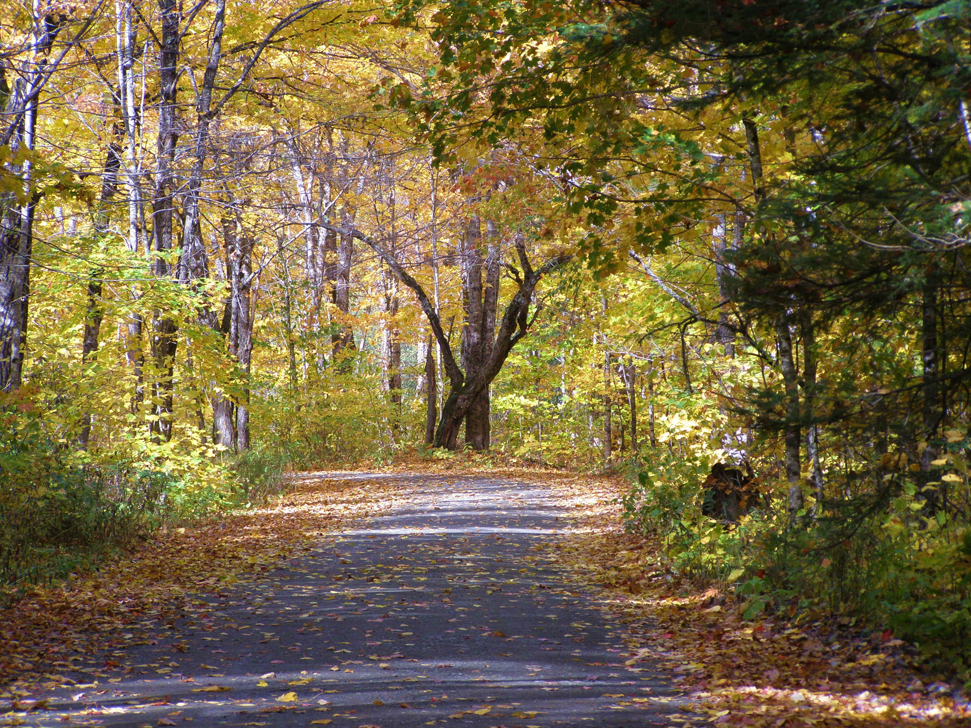 Free Computer Fall Wallpaper Beautiful Country Road In Fall Free Stock Photo Public