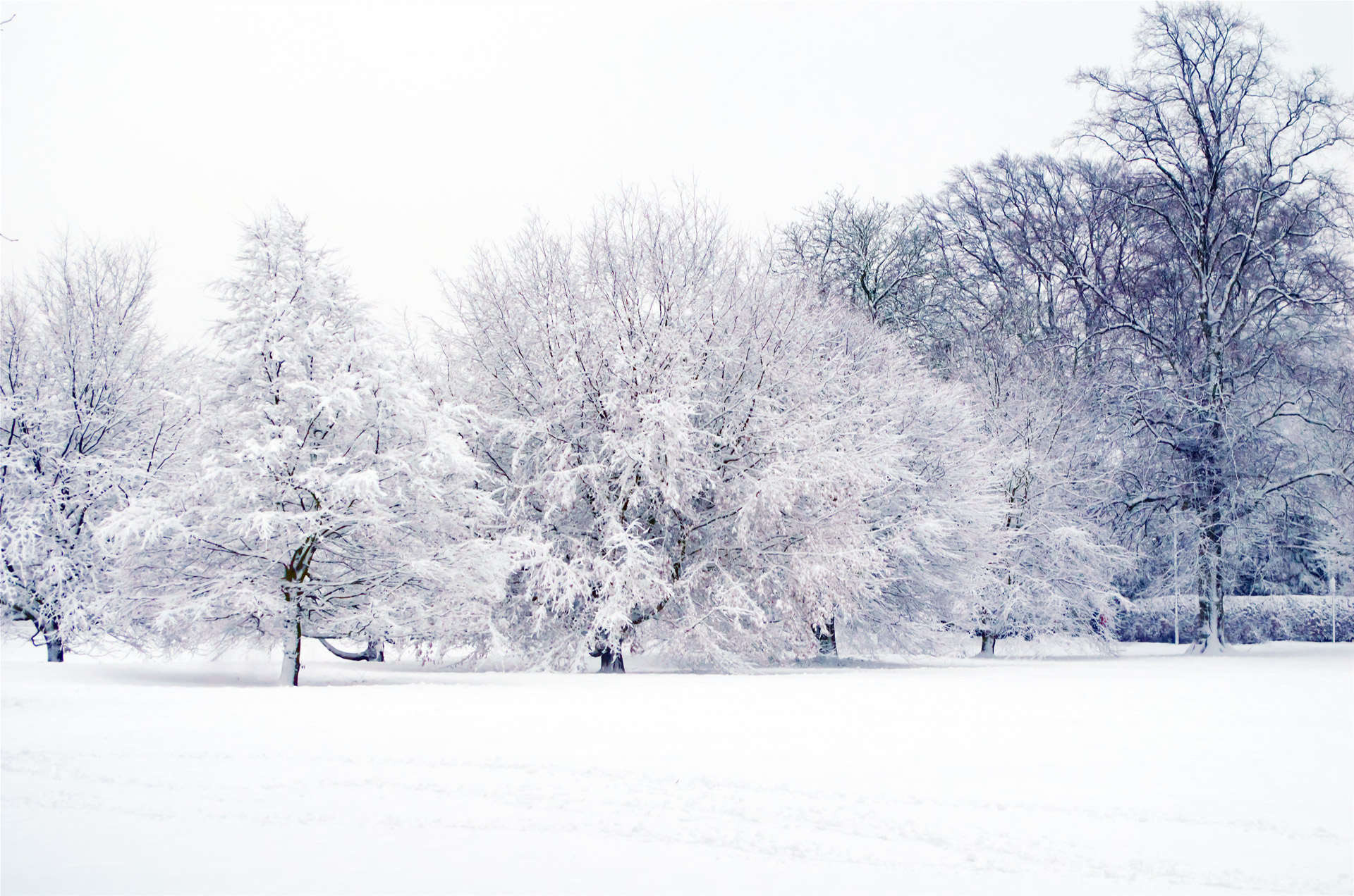 Shutterstock Hd Wallpapers Snowy Landscape 2 Free Stock Photo Public Domain Pictures