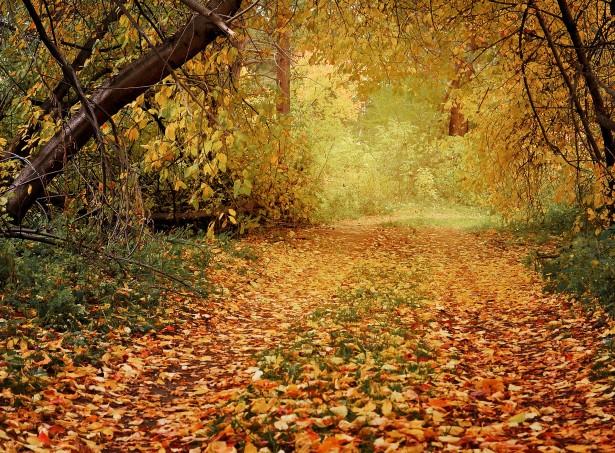 Late Fall Wallpaper Nature Herfst Pad In Het Bos Gratis Stock Foto Public Domain