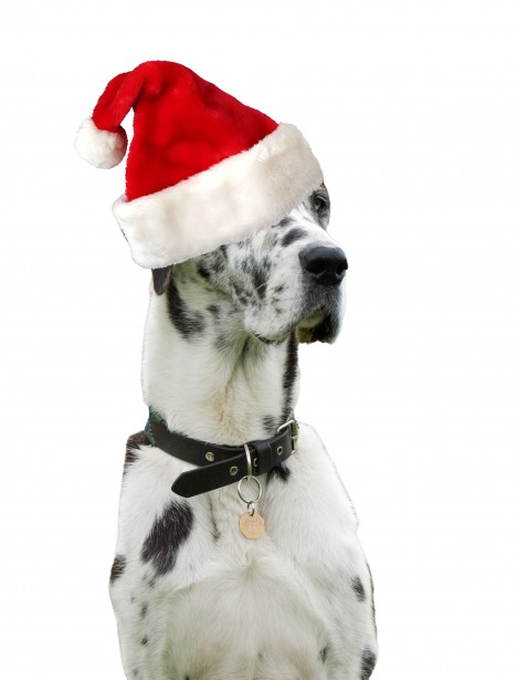 free online christmas pictures