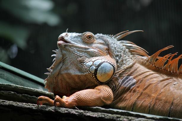 Black Wallpaper Girl Dragon Lizard Lying Under The Sun Free Stock Photo