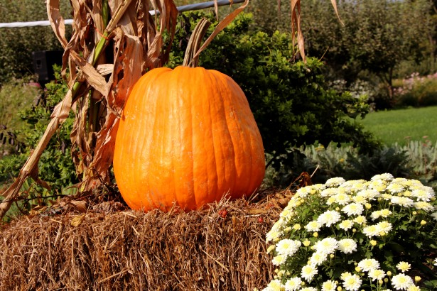 Fall Scenes Wallpaper With Pumpkins Pumpkin On Hay Bale Free Stock Photo Public Domain Pictures