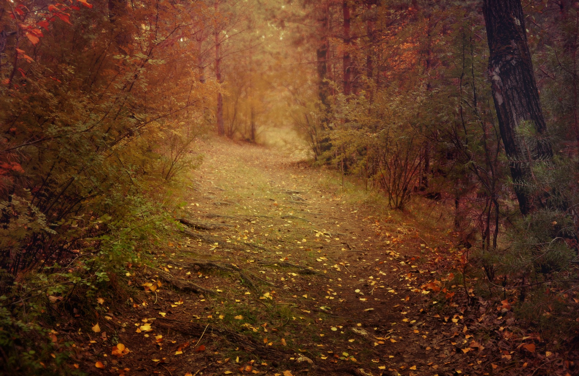 Fall Leaves Pathway Computer Wallpaper Autumn Dream Free Stock Photo Public Domain Pictures