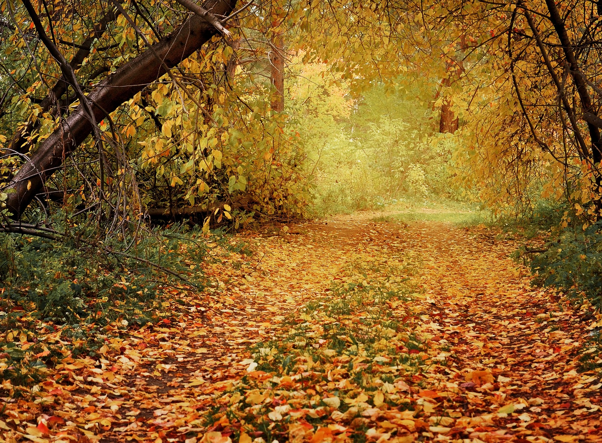 Late Fall Wallpaper Autumn Path In The Woods Free Stock Photo Public Domain