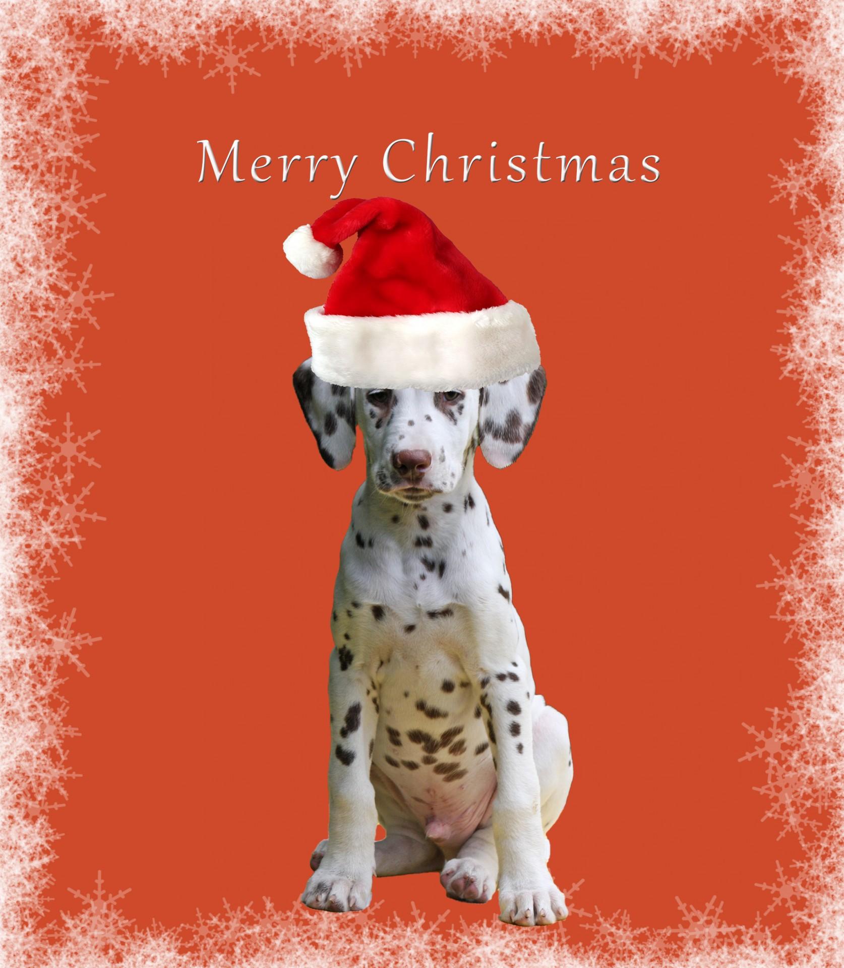 Fullsize Of Dog Christmas Cards