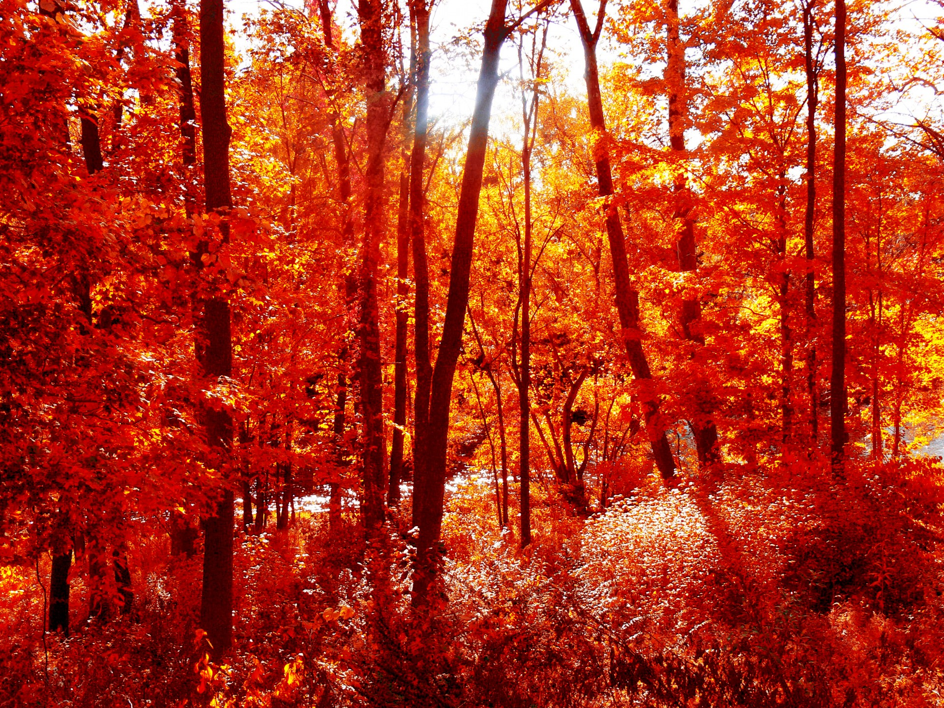 Fall Leaves Hd Wallpapers 1080p Fall Forest Leaves Free Stock Photo Public Domain Pictures