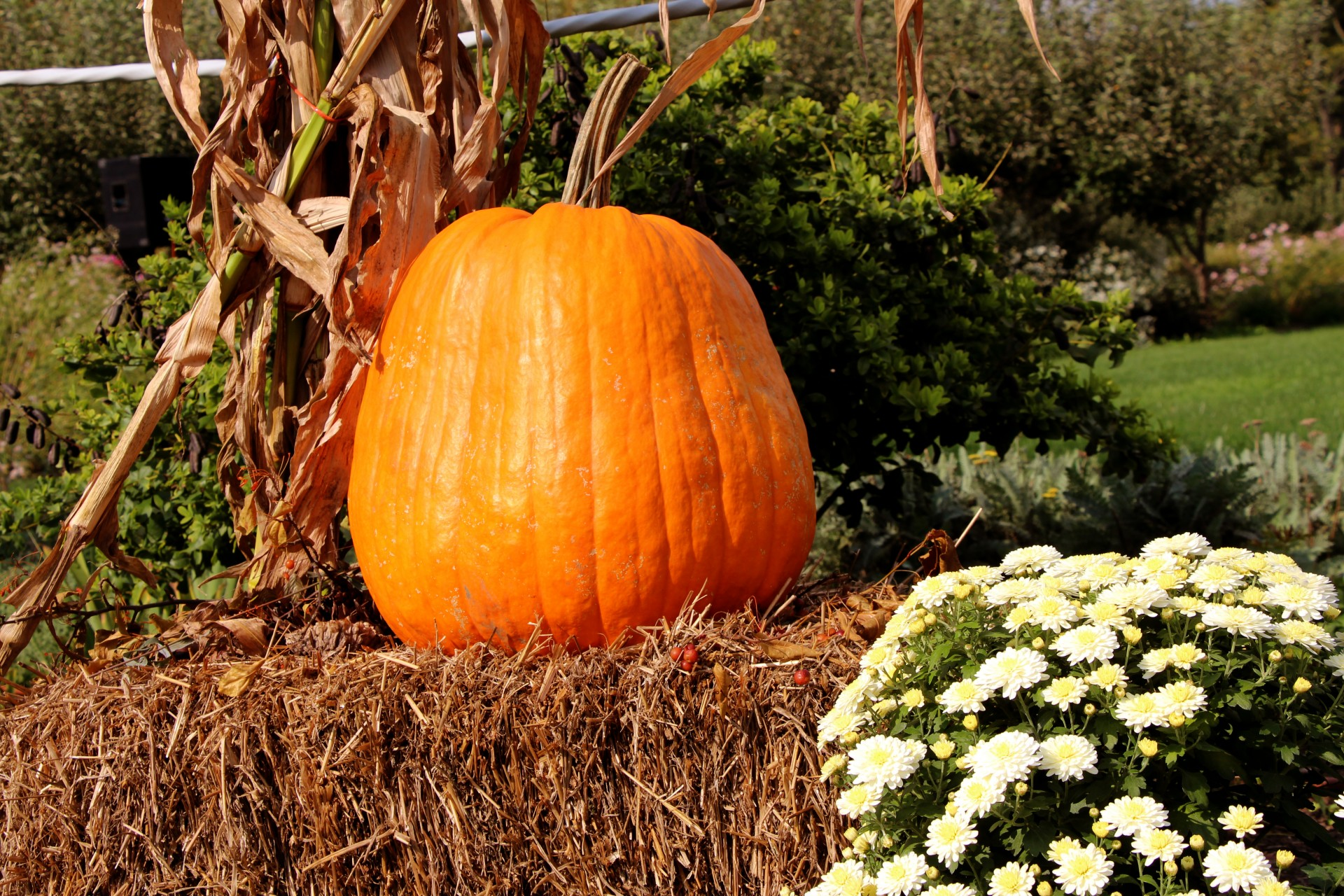Fall Harvest Wallpaper Images Pumpkin On Hay Bale Free Stock Photo Public Domain Pictures