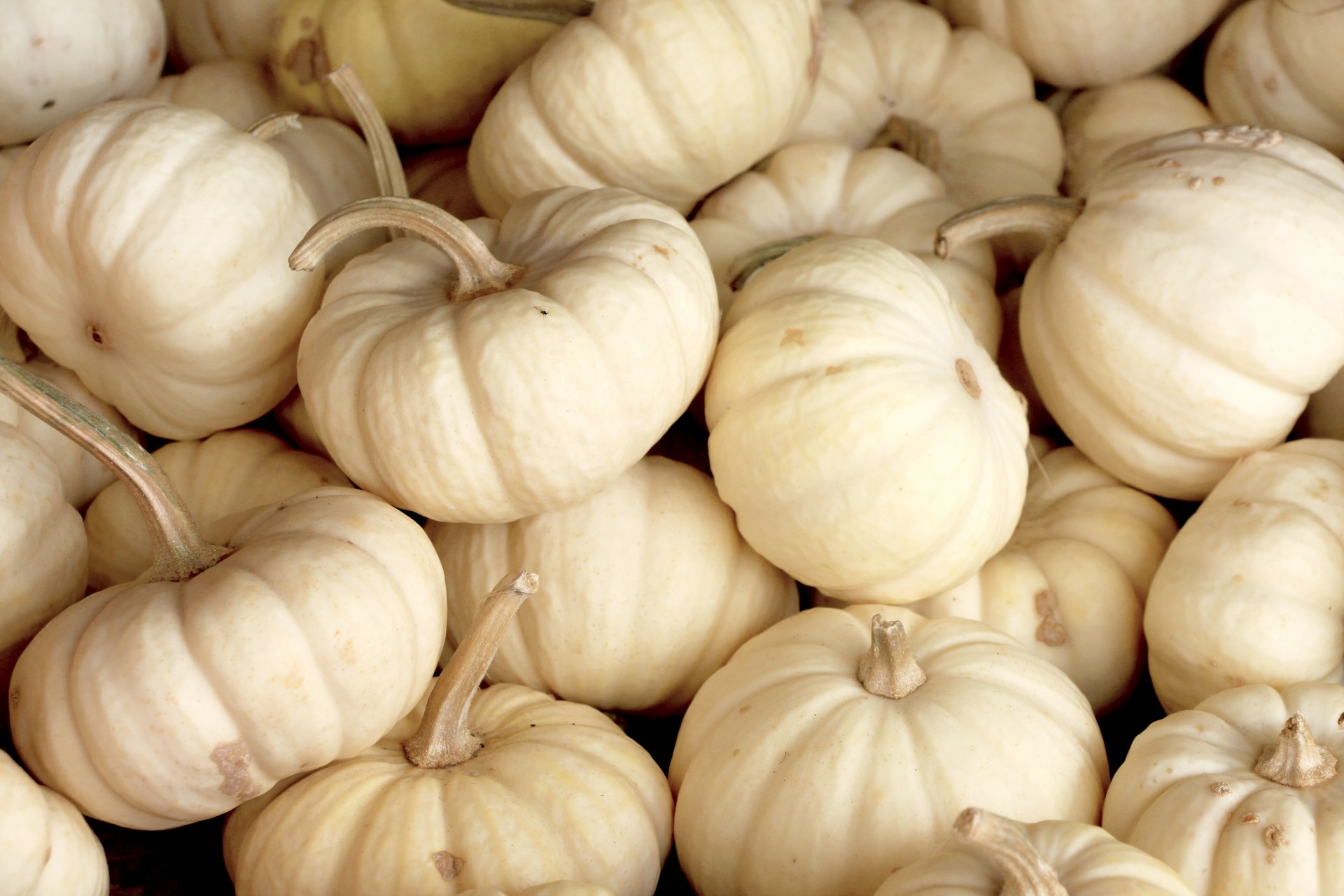 Wallpaper For Thanksgiving And Fall White Pumpkins Free Stock Photo Public Domain Pictures