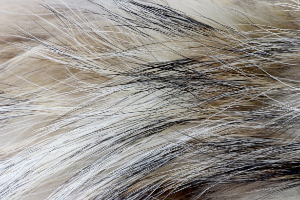 Abstract Animal Wallpaper Soft Fur Texture 2 Free Stock Photo Public Domain Pictures
