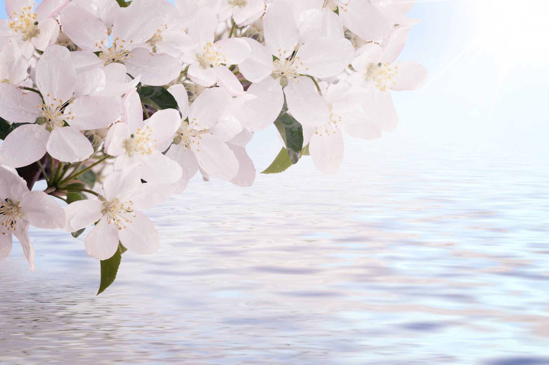 Free 3d Spring Wallpaper Spring Background Free Stock Photo Public Domain Pictures