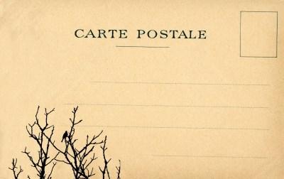Vintage Postcard Bird Tree Free Stock Photo - Public Domain Pictures